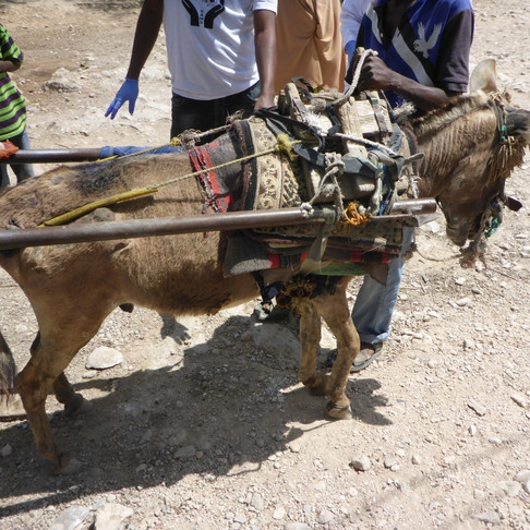 Case study: Abused Donkey Rescued by SAWS