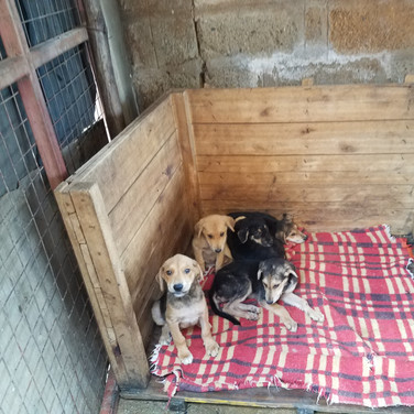 The Haven rescues many puppies