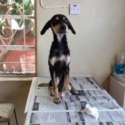 March Ella at the vet
