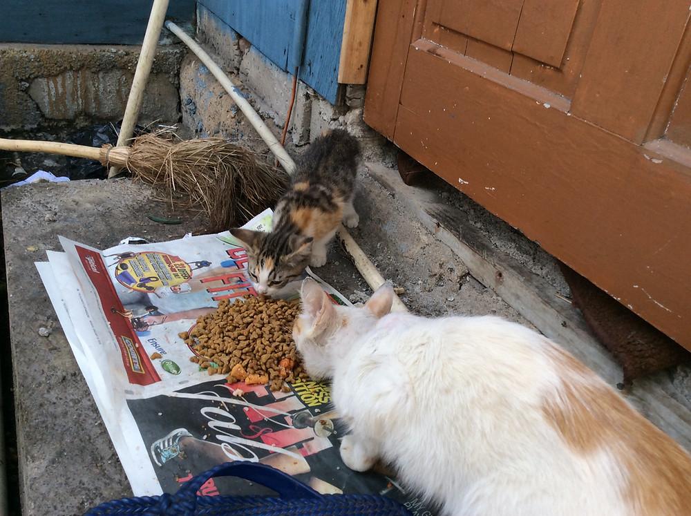 Kitties now on Deborah's feeding route