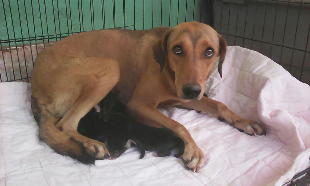 Mama & her 4 puppies - morning after rescue