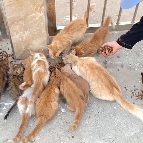 C'est la vie for cats
