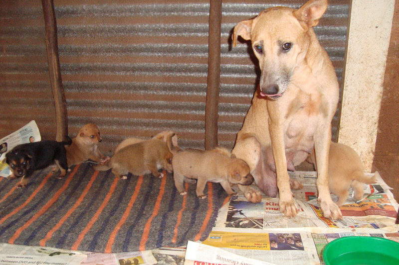 Mom and her 6 pups safe at The Haven
