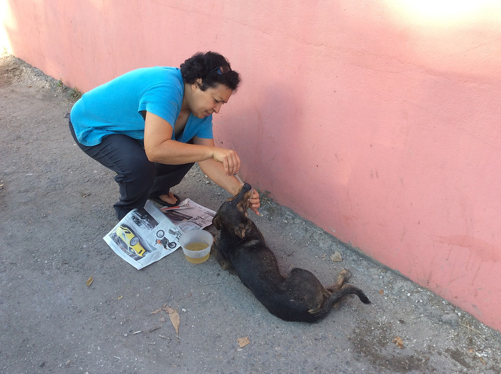 Deborah administers sugar solution to a dog that received a glancing blow from a car