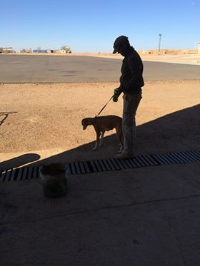 Rosie going for a walk before her flight to Niamey