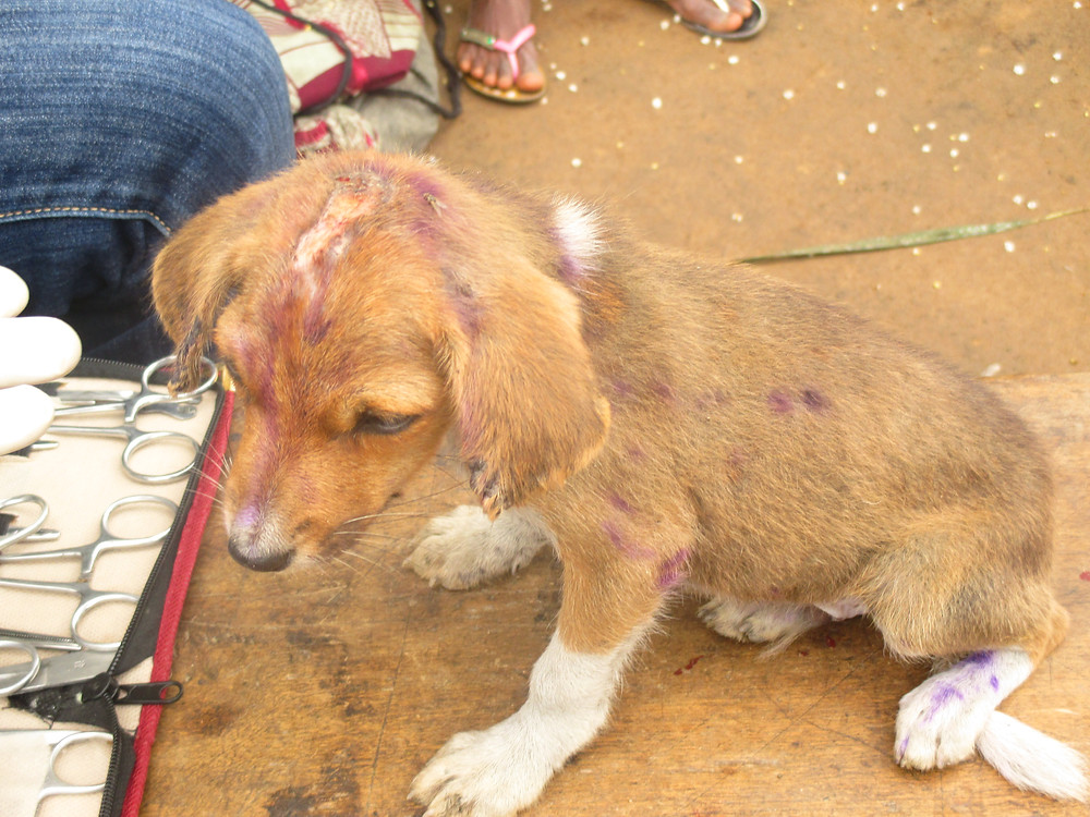 Community animal health care-puppy's skin problem attended to