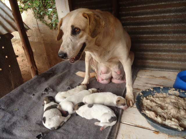 Topy and her puppies at The haven