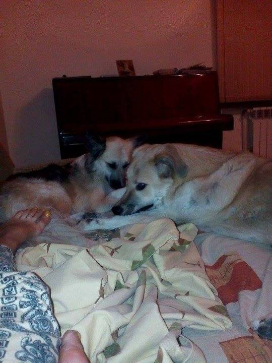 2 dogs at Nune's home, both need leg surgery