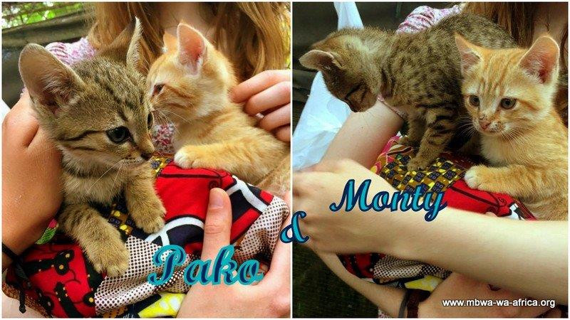 Pako and Monty go home
