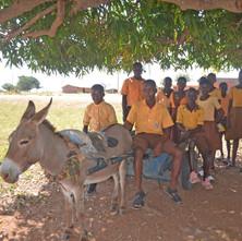 Nov Kukaruza donkey 1.JPG