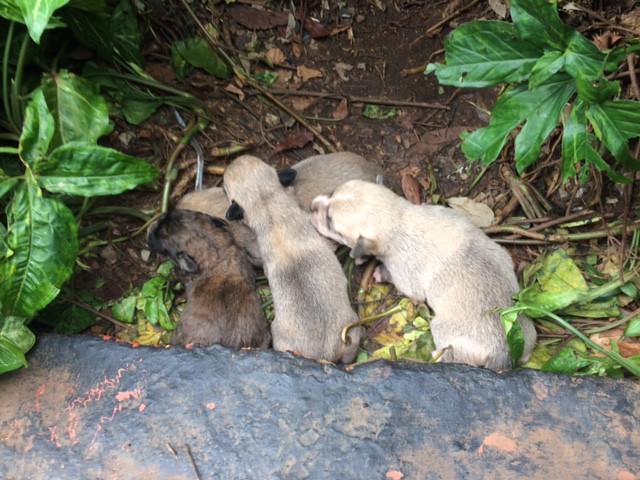 4 newborns at the Sheraton compound