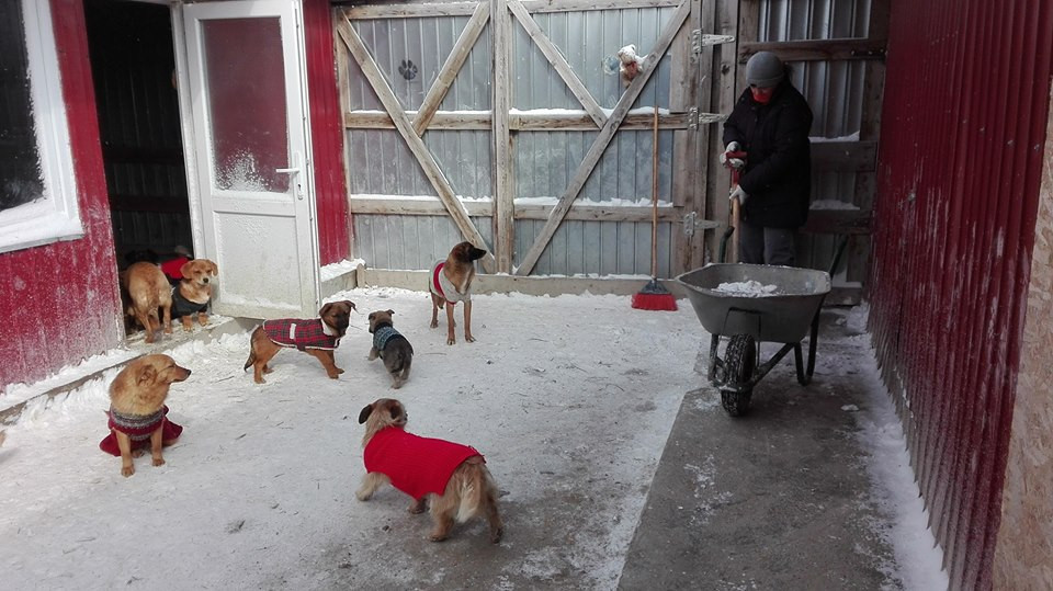 Keeping 300 dogs fed, healthy, and warm (during Romania's cold winters) is expensive!