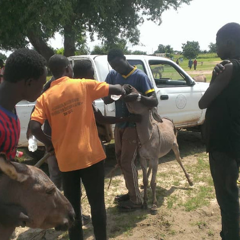 Animal Welfare Society of Cameroon: Helping Donkeys and the People who Rely on Them