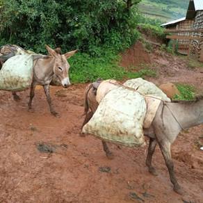 Bam Animal Clinics-Uganda, helping donkeys in Kween & Bukwo, August-October 2020