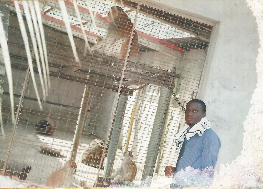 Chiemeka checking up on the situation for these captive monkeys