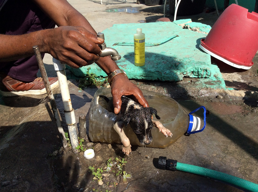 Puppy gets a much needed bath