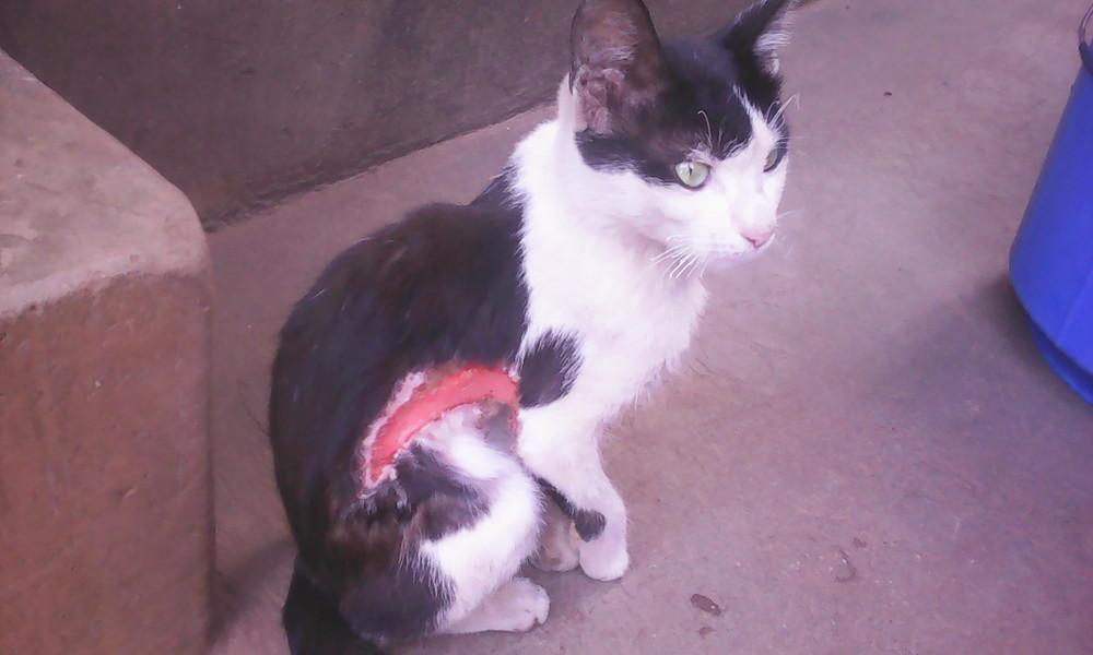Injury caused by cruel owner