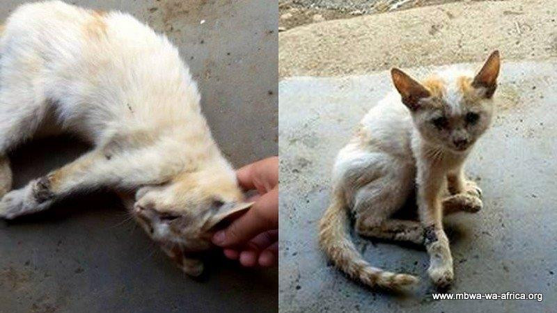 Photo 6. Minou before-after