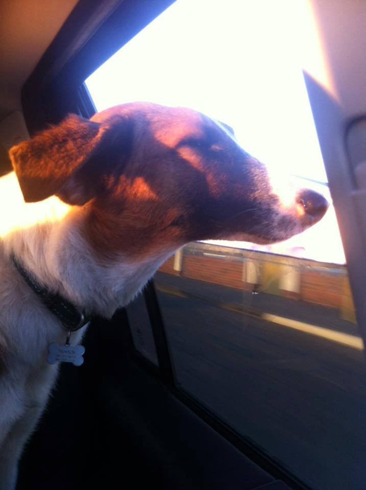 Stretch loves to ride in the car