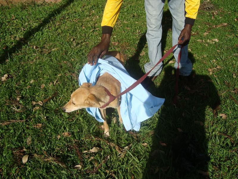 Skamper being rescued