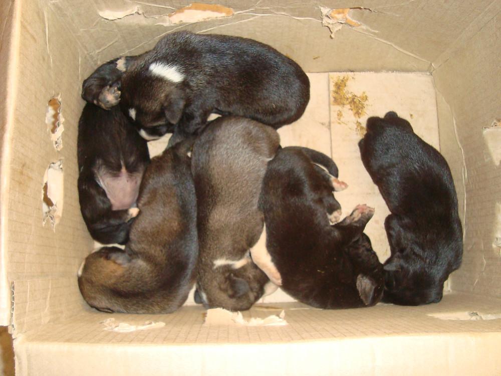 Owori Joshua rescued 6 puppies!