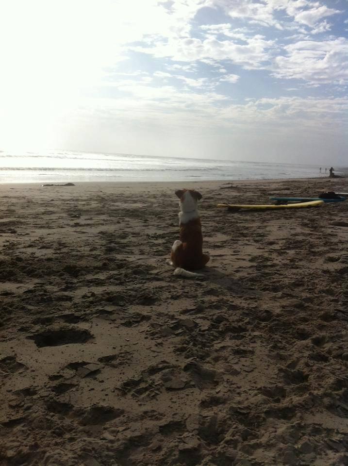 Stretch loves the beach