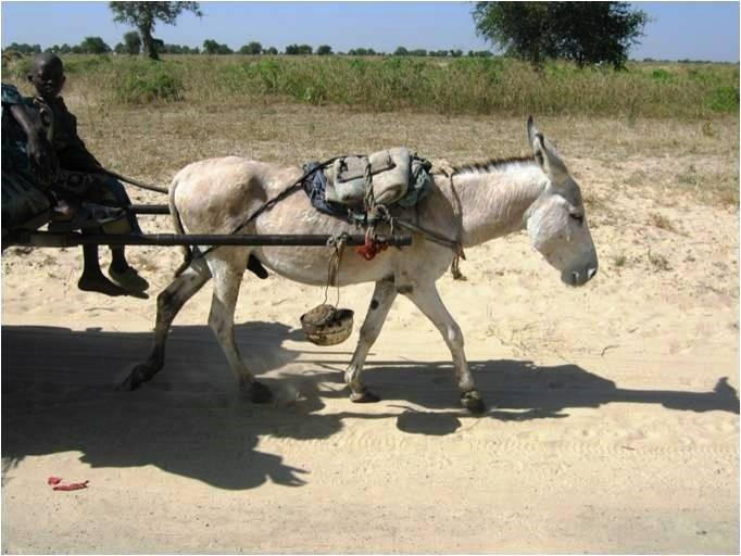 A donkey is being used to transport a family, a relatively inexpensive mode of transport