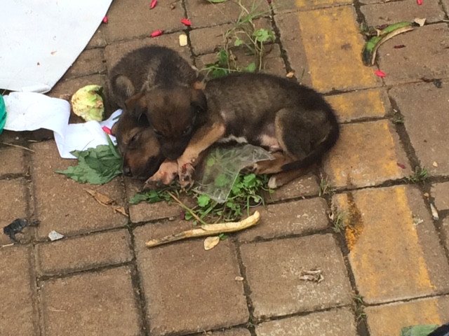 Puppies rescued!