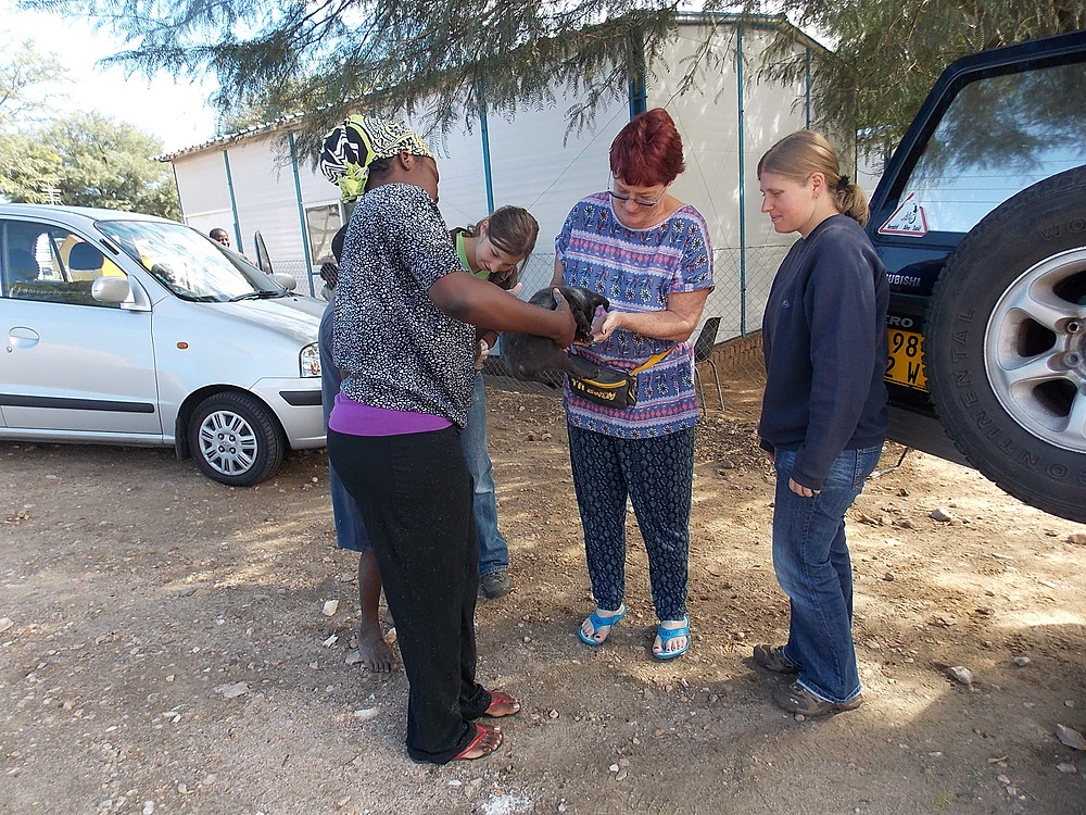 checking out a puppy during our April visit to Katutura