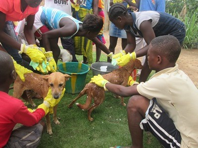 Vezala students had a dog washing day