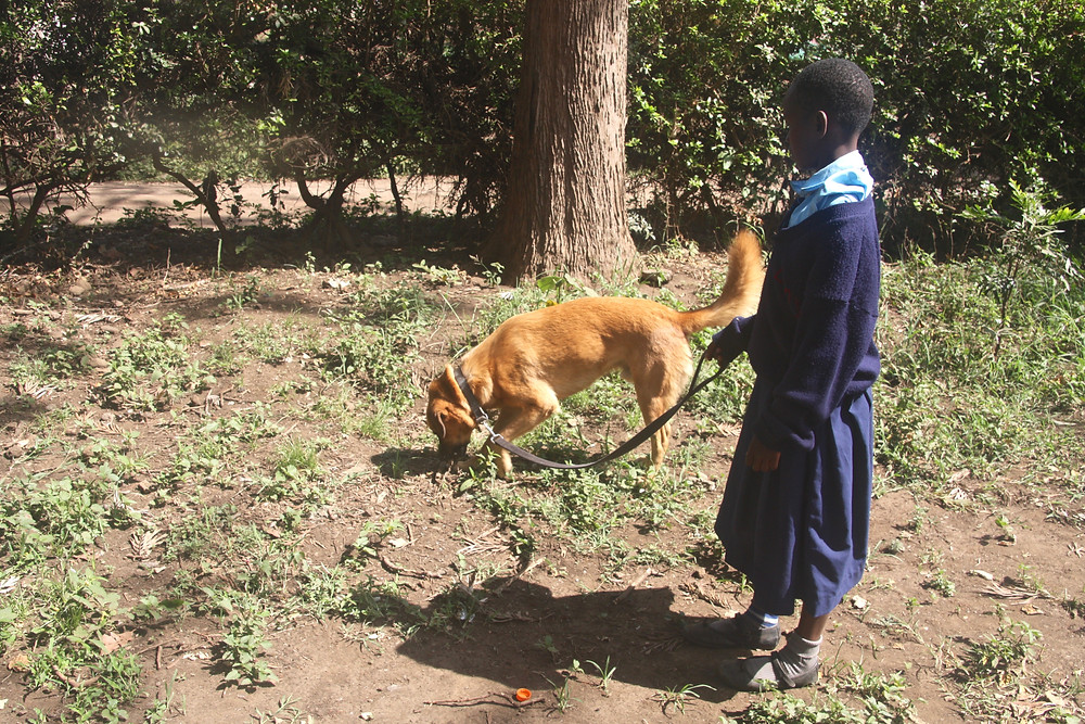 Walking a dog isn't common in Tanzania, but Maureen's students learn that it's fun for everyone!