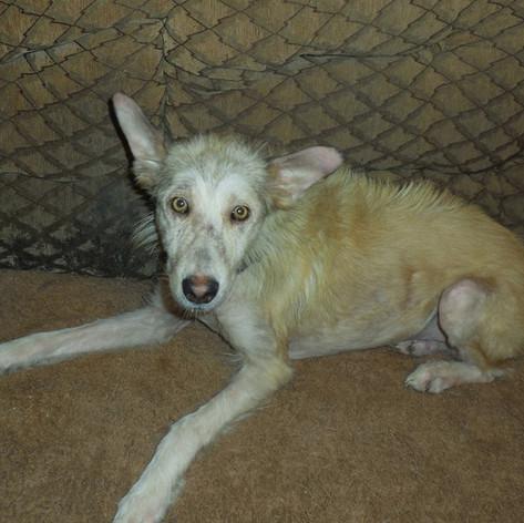 Zorrito rescued