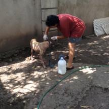 Deborah gives a mange bath