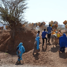 SAWS target area for donkey clinics
