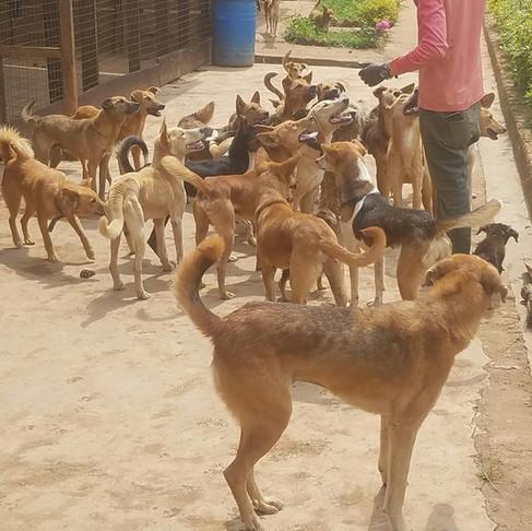 Paterne Bushunju in Bukavu, Democratic Republic of Congo: A Life Dedicated to Helping Animals