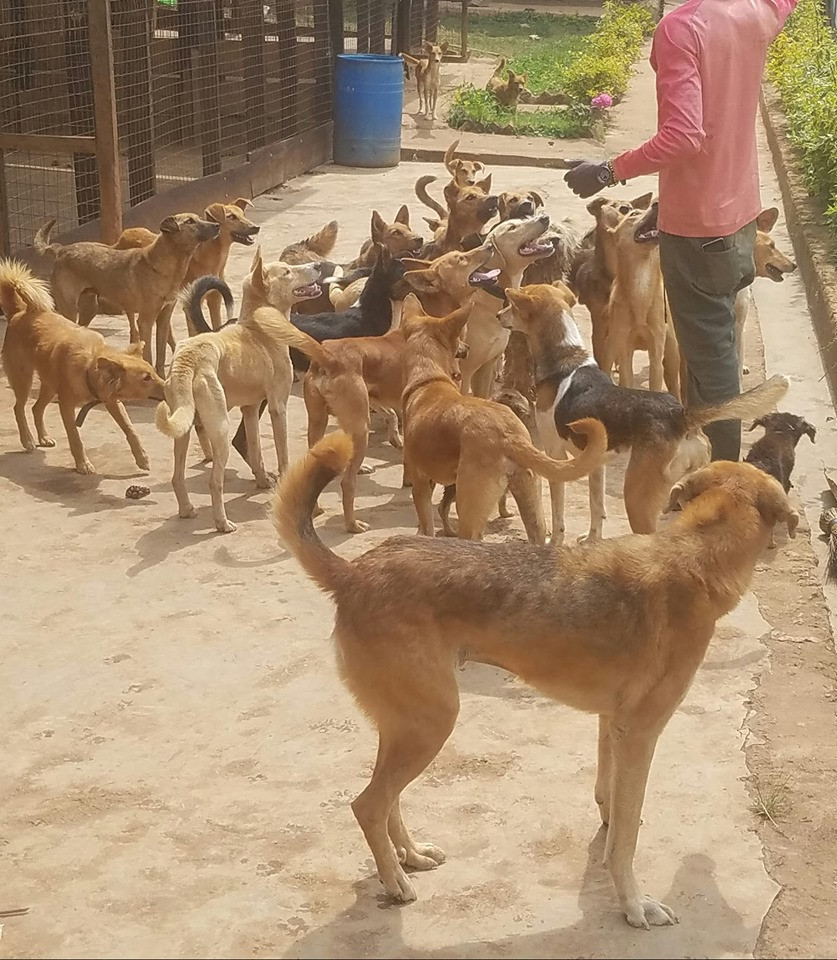 animal shelter in the Democratic Republic of Congo