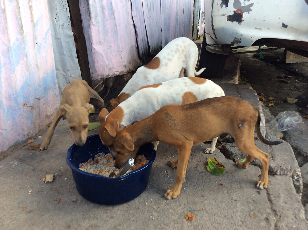 Group of 4 street dogs, 3 are spayed, 1 still needs to be spayed
