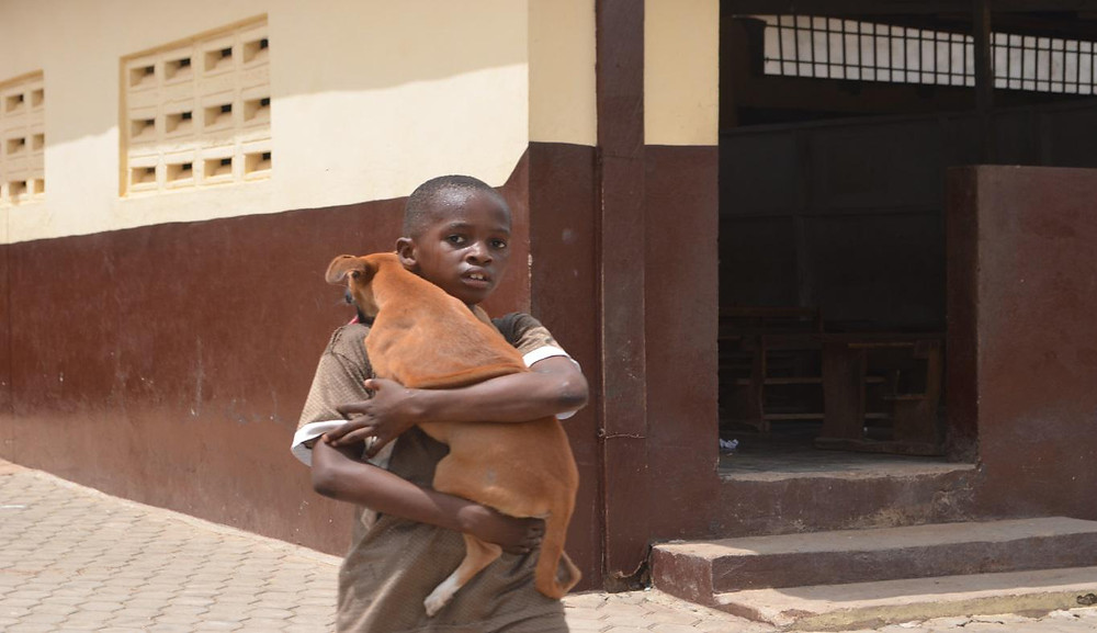 A dog being carried to the clinic to get rabies jab