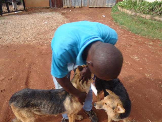 Alex rescued dogs threatened with stoning