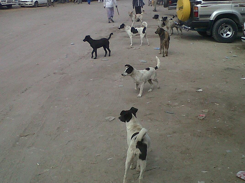 Dogs gather on the streets of Hargeisa