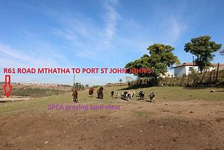 32-SPCA grazing land - Copy_800x533.JPG