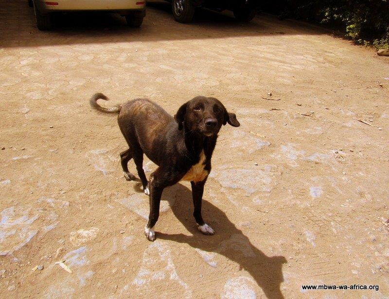 Mama dog at MwA-looking good!