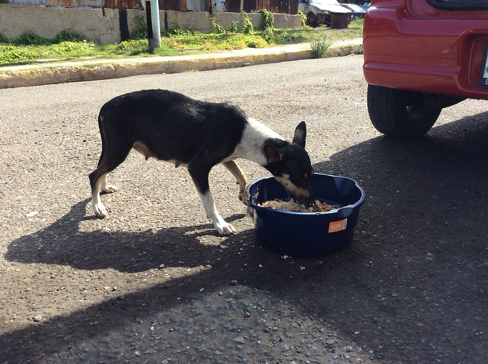 Deborah feeds and will soon spay mama dog