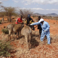 TAWESO Donkey Clinic