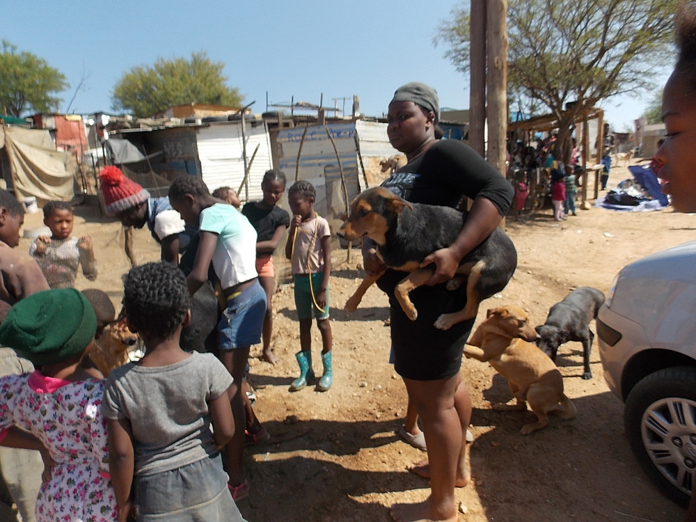 There's no other accessible vet care in Katutura
