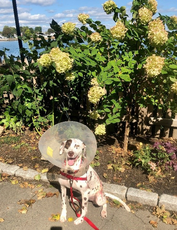 Keti with her cone-in Boston!