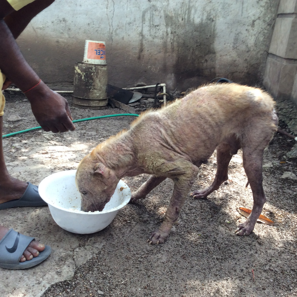 Owner of the dog with mange