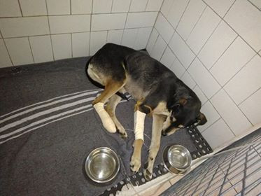 June 14 dog from Henties whose vet care