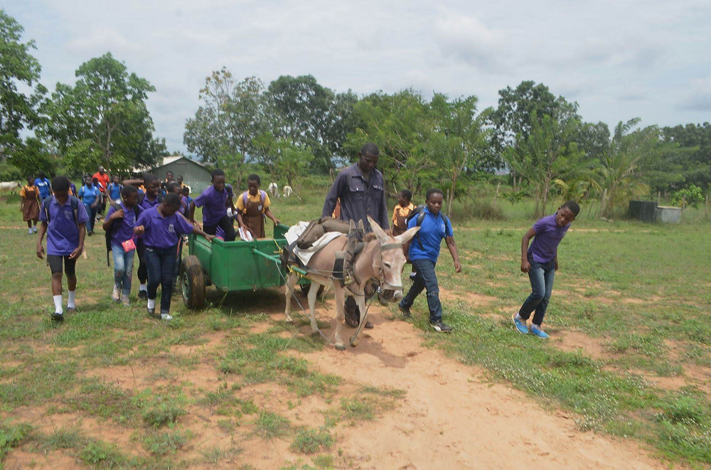 rides in wagon pulled by donkey