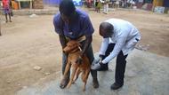 Sept 12 rabies clinic at Dome Konka-4.JP